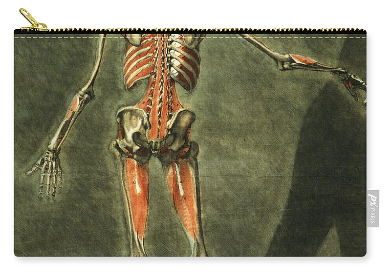 Skeleton Carry-all Pouch featuring the painting Deep Muscular System Of The Back by Arnauld Eloi Gautier D'Agoty