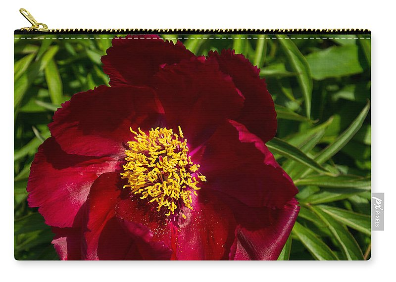 Peony Carry-all Pouch featuring the photograph Deep Red Peony With Bright Yellow Stamens by Georgia Mizuleva