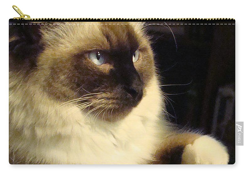 Ragdoll Carry-all Pouch featuring the photograph Deep Thought by Nancy L Marshall