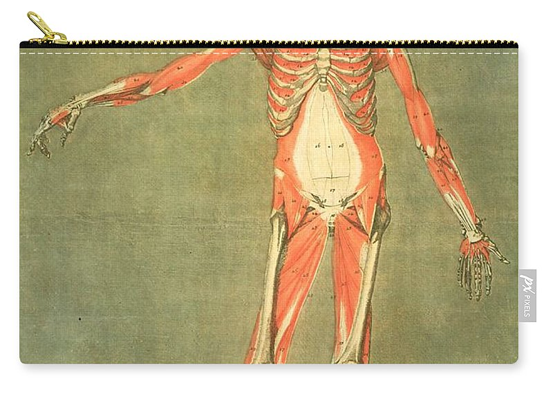 Skeleton Carry-all Pouch featuring the painting Deeper Muscular System Of The Front by Arnauld Eloi Gautier D'Agoty