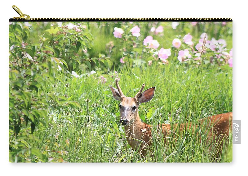 Deer In Magee Marsh Carry-all Pouch featuring the photograph Deer In Magee Marsh by Dan Sproul