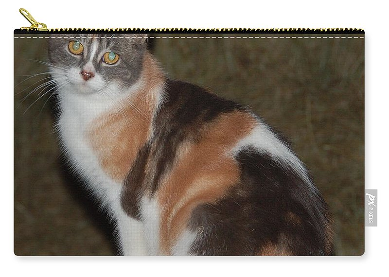 Cat Carry-all Pouch featuring the photograph Delia by Valerie Kirkwood