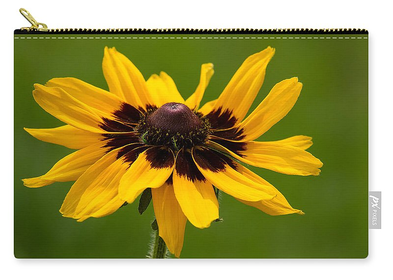 Denver Daisy Carry-all Pouch featuring the photograph Denver Daisy by Penny Meyers