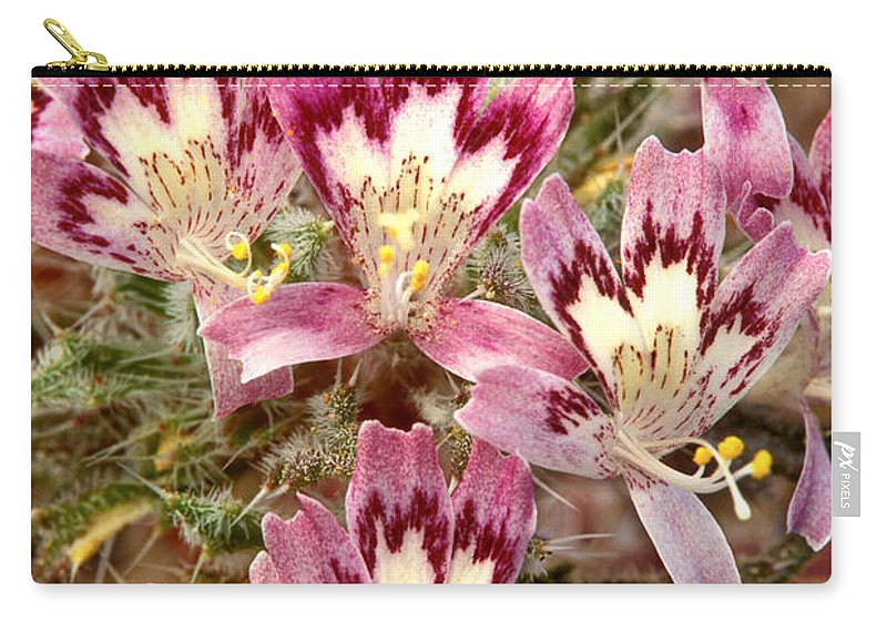 Desert Calico Carry-all Pouch featuring the photograph Desert Calico Wildflowers by Dave Welling