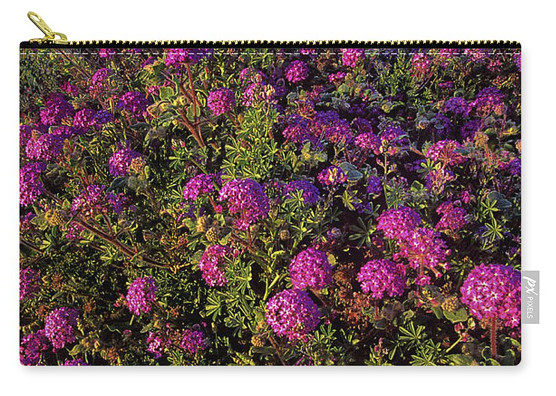 Desert Sand Verbena Carry-all Pouch featuring the photograph Desert Sand Verbena Wildflowers by Dave Welling