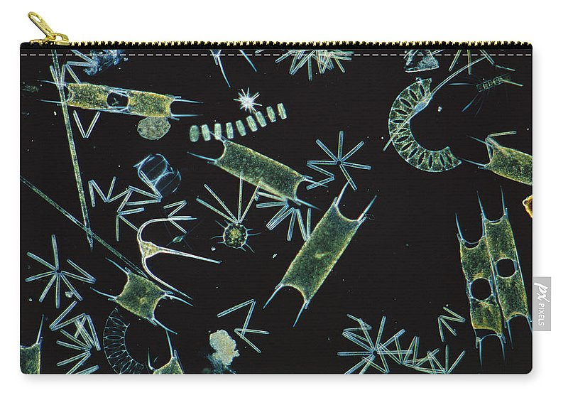 Flpa Carry-all Pouch featuring the photograph Diatoms And Dinoflagellates by D P Wilson