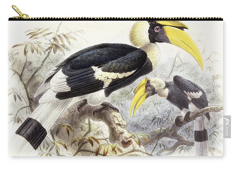Hornbill Carry-all Pouch featuring the painting Dichocerus Bicornis by Johan Gerard Keulemans