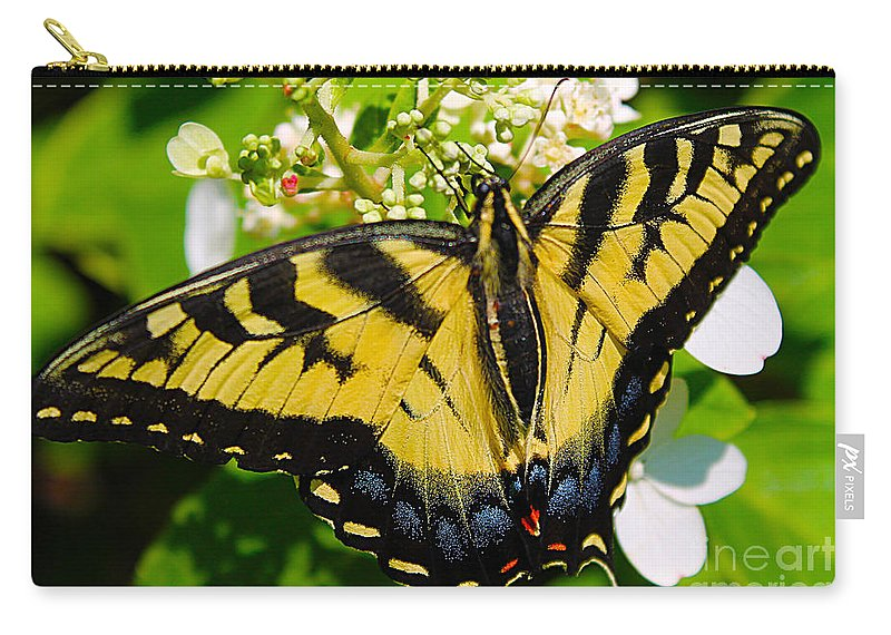 Butterflies Carry-all Pouch featuring the photograph Dinner For The Swallowtail by Nina Silver