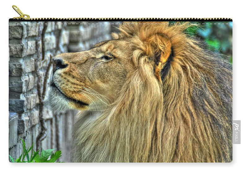 Lion Carry-all Pouch featuring the photograph Dinner Time...can't You Smell It...lazy Boy At The Buffalo Zoo by Michael Frank Jr