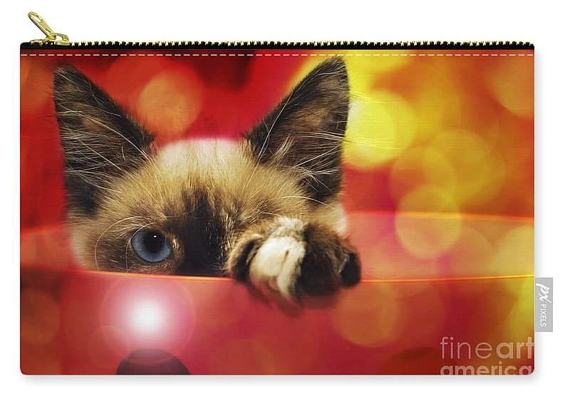 Andee Design Cats Carry-all Pouch featuring the photograph Disco Kitty 1 by Andee Design
