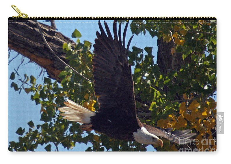 Colorado Carry-all Pouch featuring the photograph Diving by Bob Hislop