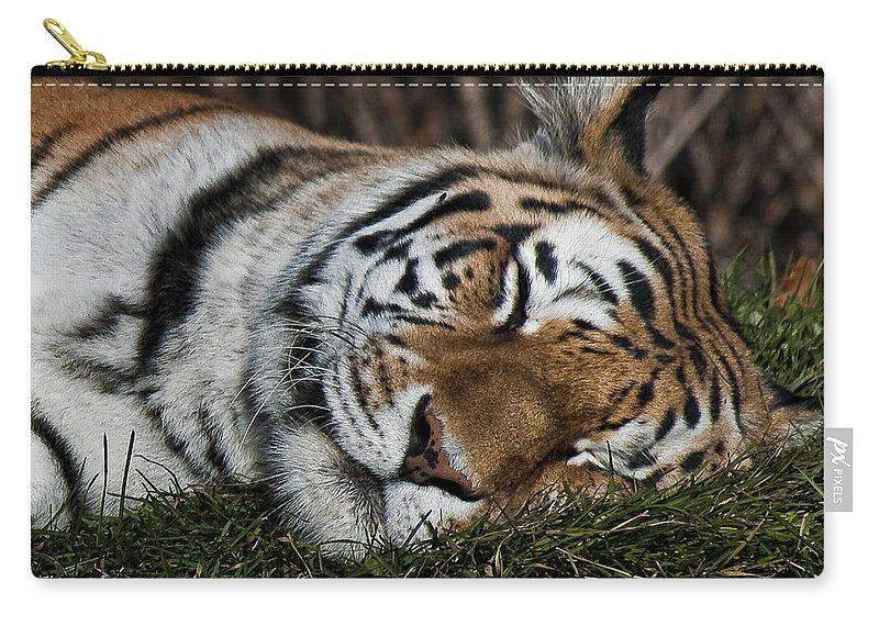 Tiger Carry-all Pouch featuring the photograph Do Not Disturb by Steve Harrington