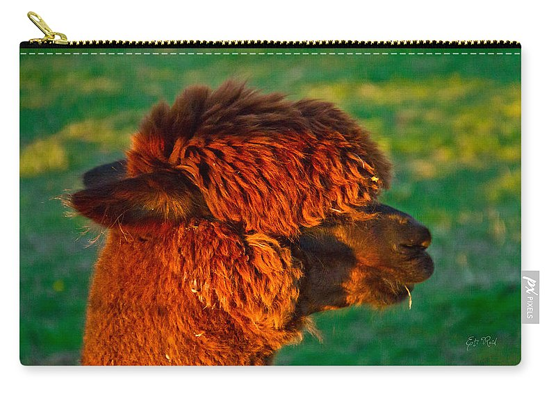 Adorable Carry-all Pouch featuring the photograph Do You Like My New Haircut Alpaca by Eti Reid