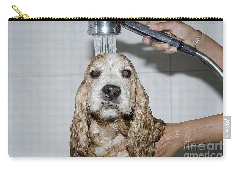 Dog Carry-all Pouch featuring the photograph Dog Taking A Shower by Mats Silvan