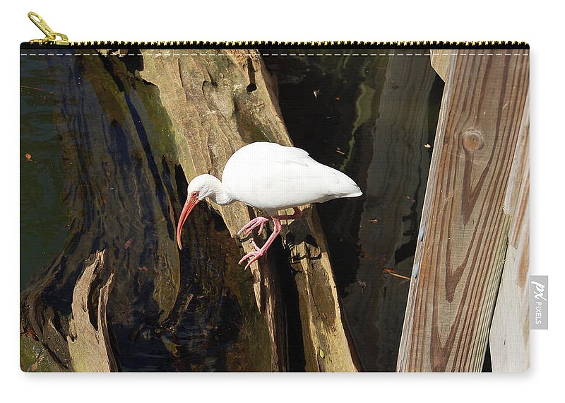 Bird Carry-all Pouch featuring the photograph White Ibis Bird by Aimee L Maher ALM GALLERY