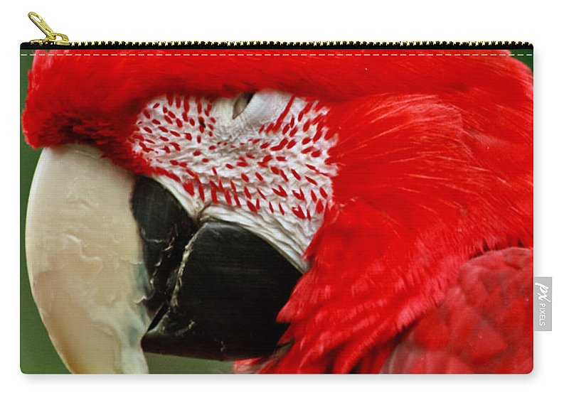 Macaw Carry-all Pouch featuring the photograph Dont You Dare To Stare Macaw by Eti Reid
