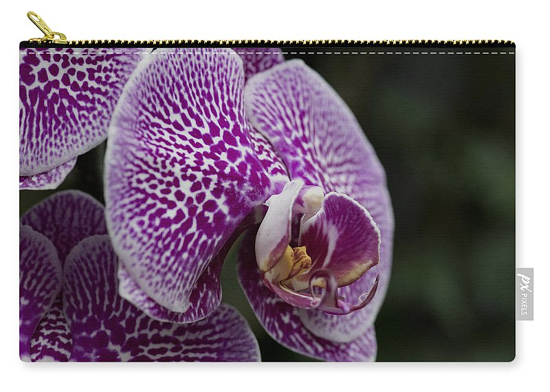 Macro Purple Dtps Carry-all Pouch featuring the photograph Doritaenopsis Leopard Prince Macro 2636 by Terri Winkler