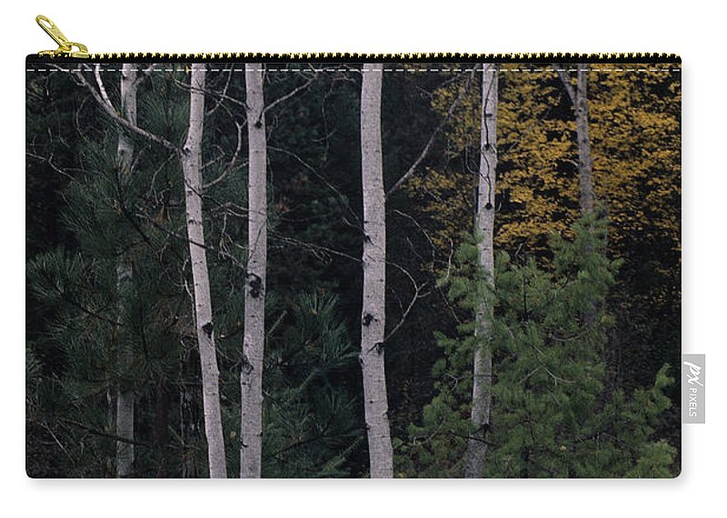 Aspens Carry-all Pouch featuring the photograph Dormant And Not by Sharon Elliott