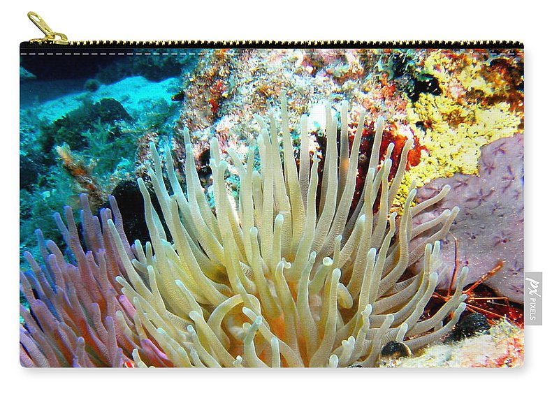 Nature Carry-all Pouch featuring the photograph Double Giant Anemone And Arrow Crab by Amy McDaniel
