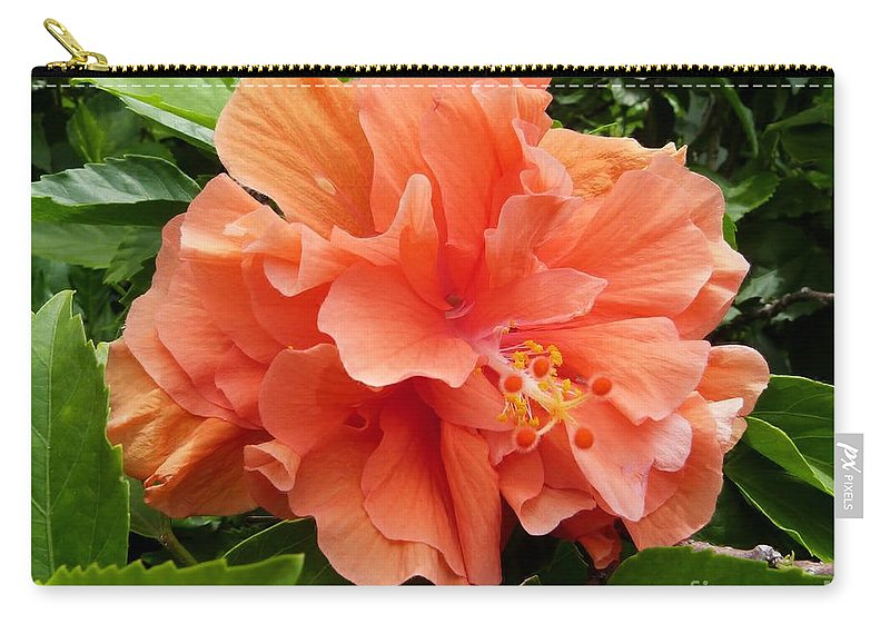 Double Peach Hibiscus Carry-all Pouch featuring the photograph Double Peach Hibiscus by Amar Sheow