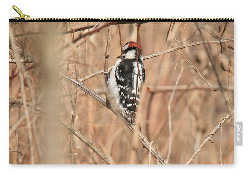 Woodpecker Carry-all Pouch featuring the photograph Downy Woodpecker In Brush by Crystal Heitzman Renskers