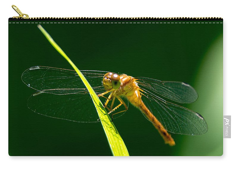 Insect Carry-all Pouch featuring the photograph Dragon Fly On Grass by Richard Kitchen