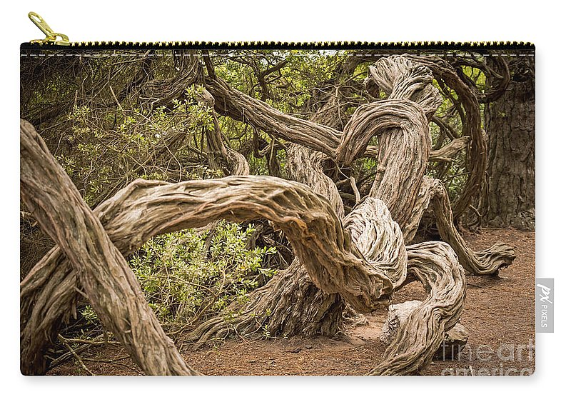 Coastal Tea Tree Carry-all Pouch featuring the photograph Dragon Tree by Kate Brown