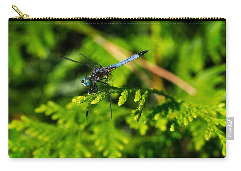 Dragonfly Carry-all Pouch featuring the photograph Dragonfly by David Kay