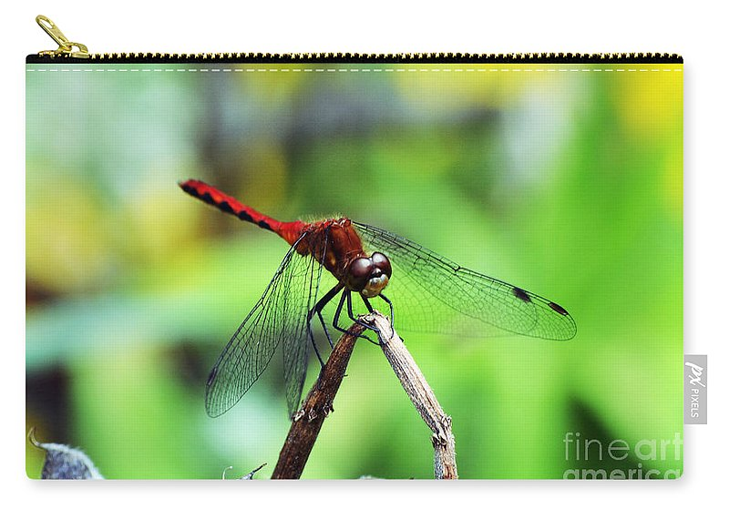 Wings Carry-all Pouch featuring the photograph Dragonfly Hard At Work by Kevin Fortier