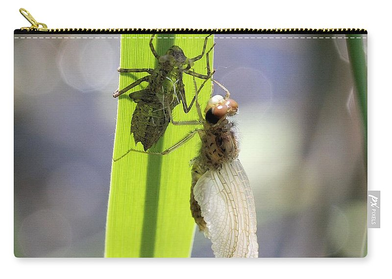 Dragonfly Carry-all Pouch featuring the photograph Dragonfly Metamorphosis - Fifth In Series by Doris Potter
