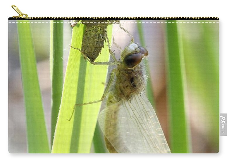 Dragonfly Carry-all Pouch featuring the photograph Dragonfly Metamorphosis - Sixth In Series by Doris Potter