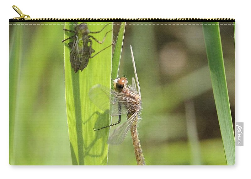 Dragonfly Carry-all Pouch featuring the photograph Dragonfly Metamorphosis - Tenth In Series by Doris Potter
