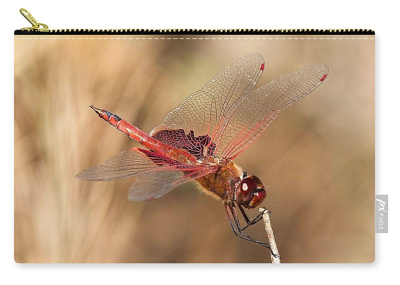 Dragonfly Carry-all Pouch featuring the photograph Dragonfly by Stuart Litoff