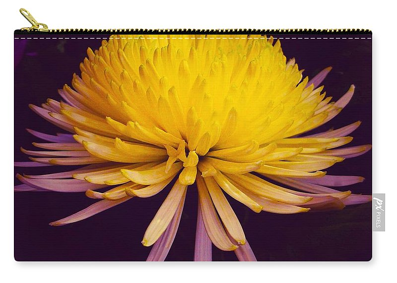 Chrysanthemum Carry-all Pouch featuring the photograph Dual Coloured Chrysanthemum by Joan-Violet Stretch