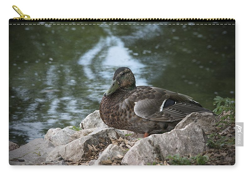 Duck Carry-all Pouch featuring the photograph Duck by Jayne Gohr
