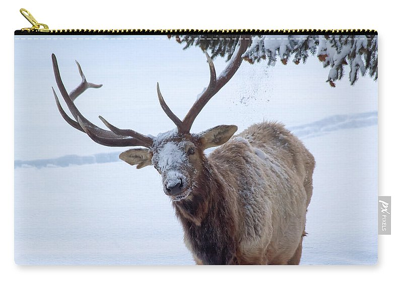 Snow Carry-all Pouch featuring the photograph Dumped On by Shane Bechler