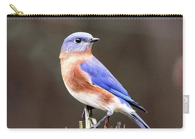 Bluebird Carry-all Pouch featuring the photograph Eastern Bluebird - The Old Fence Post by Travis Truelove