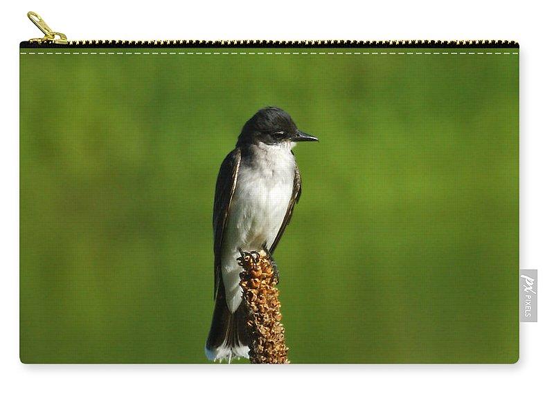 Eastern Kingbird Carry-all Pouch featuring the photograph Eastern Kingbird by Ernie Echols