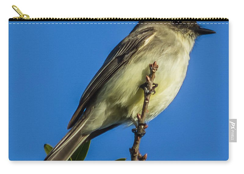 Bird Carry-all Pouch featuring the photograph Eastern Phoebe by Jane Luxton