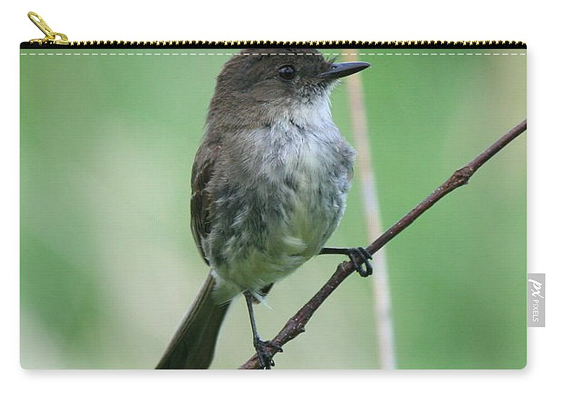 Eastern Phoebe Carry-all Pouch featuring the photograph Eastern Phoebe by Neal Eslinger