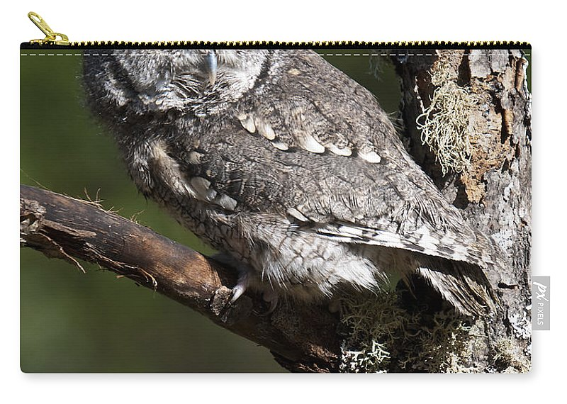 Eastern Screech Owl Carry-all Pouch featuring the photograph Eastern Screech-owl Otus Asio by Paul Cannon