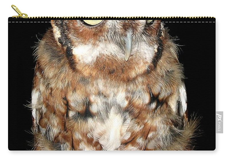 Screech Owls Carry-all Pouch featuring the photograph Eastern Screech Owl by Rose Santuci-Sofranko