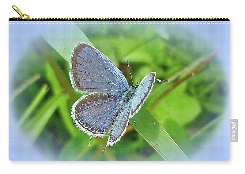 Butterfly Carry-all Pouch featuring the photograph Eastern-tailed Blue Butterfly - Cupido Comyntas by Mother Nature