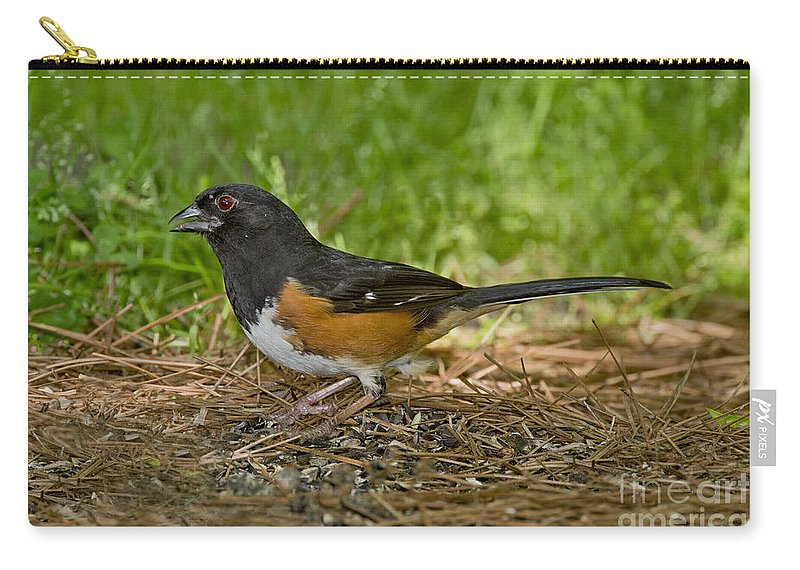 Eastern Towhee Carry-all Pouch featuring the photograph Eastern Towhee by Anthony Mercieca