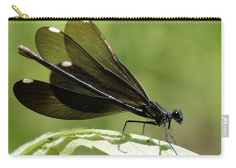 Ebony Jewelwing Carry-all Pouch featuring the photograph Ebony Jewelwing Fluttering For Male by Doris Potter