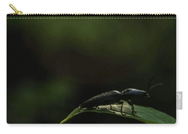 Elateridae Carry-all Pouch featuring the photograph Elateridae Beetle At Sunrise 1 by Douglas Barnett