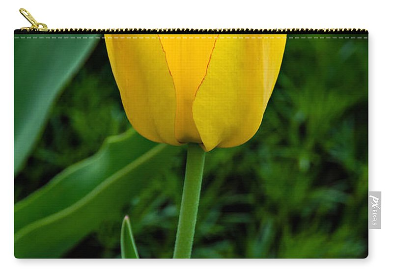 Tulip Carry-all Pouch featuring the photograph Elegance by Steve Harrington