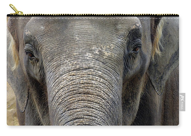 Elephant Carry-all Pouch featuring the photograph Elephant Close Up 1 by Tom Conway