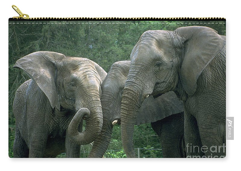 Elaphant Carry-all Pouch featuring the photograph Elephant Ladies by Gary Gingrich Galleries