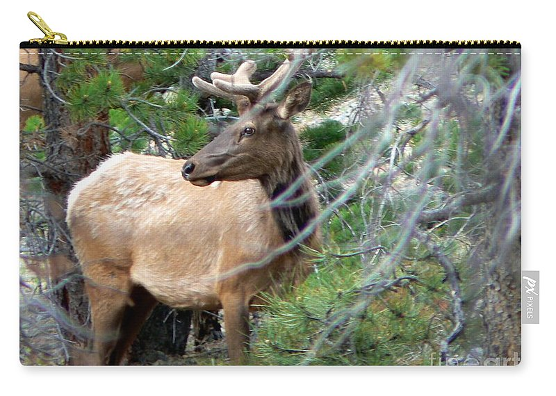 Elk Carry-all Pouch featuring the photograph Elk In Rocky Mountain National Park by Rincon Road Photography By Ben Petersen